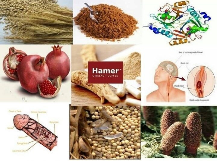 HAMER CANDY - Ginseng & Coffee - 100% Authorised Reseller in ...